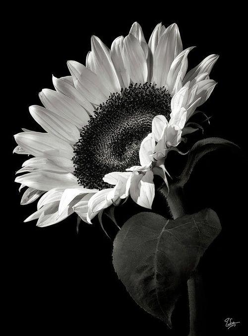 5 tumblr flowers flores blanco y negro fondos de for Sfondi bianco e nero tumblr