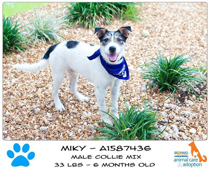 12+ Broward county animal care and adoption center images
