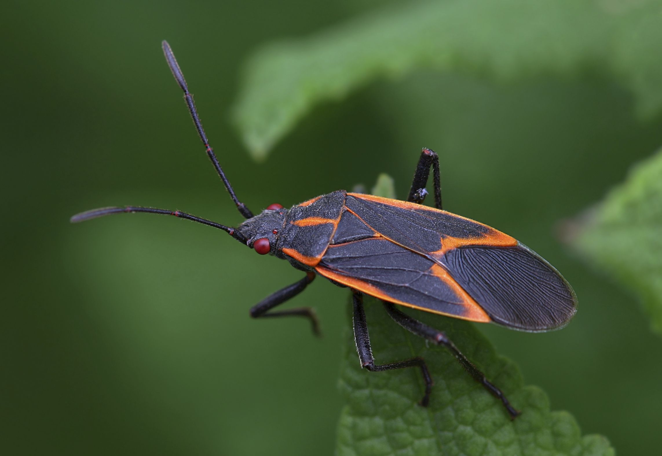 Are There Red Lightning Bugs 307 best Firefly Lightning Bug