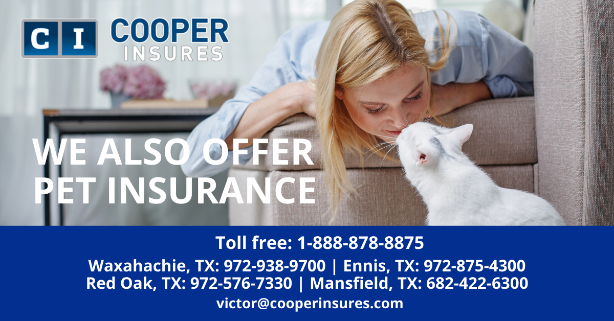 At Cooper Insures We Offer Pet Insurance As We Understand That Your Pets Are Your Family And Know Just Like Other Me In 2020 Pet Insurance Insurance Compare Insurance