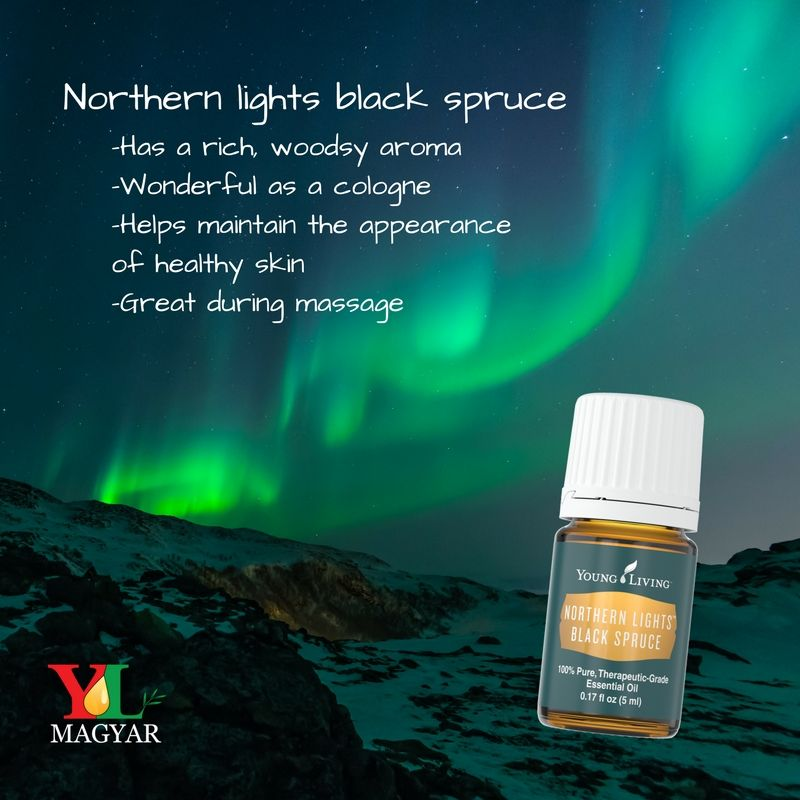 Lorand Loves To Wear Northern Lights Black Spruce As His