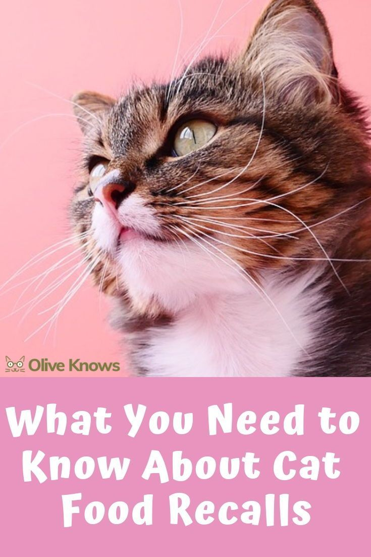 What You Need to Know About Cat Food Recalls OliveKnows