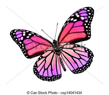 Butterfly Drawings With Color Pink Stock Illustration - C...