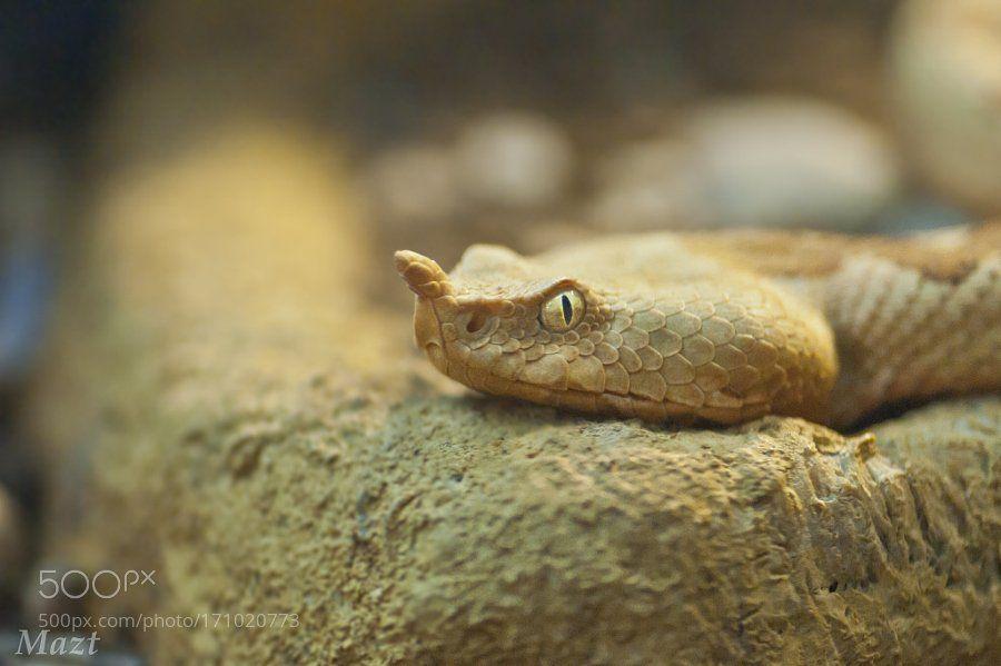 RT: venomous look #photography #Pics https://t.co/Ctr5agyEI5 via WikiFauna #followme #photography