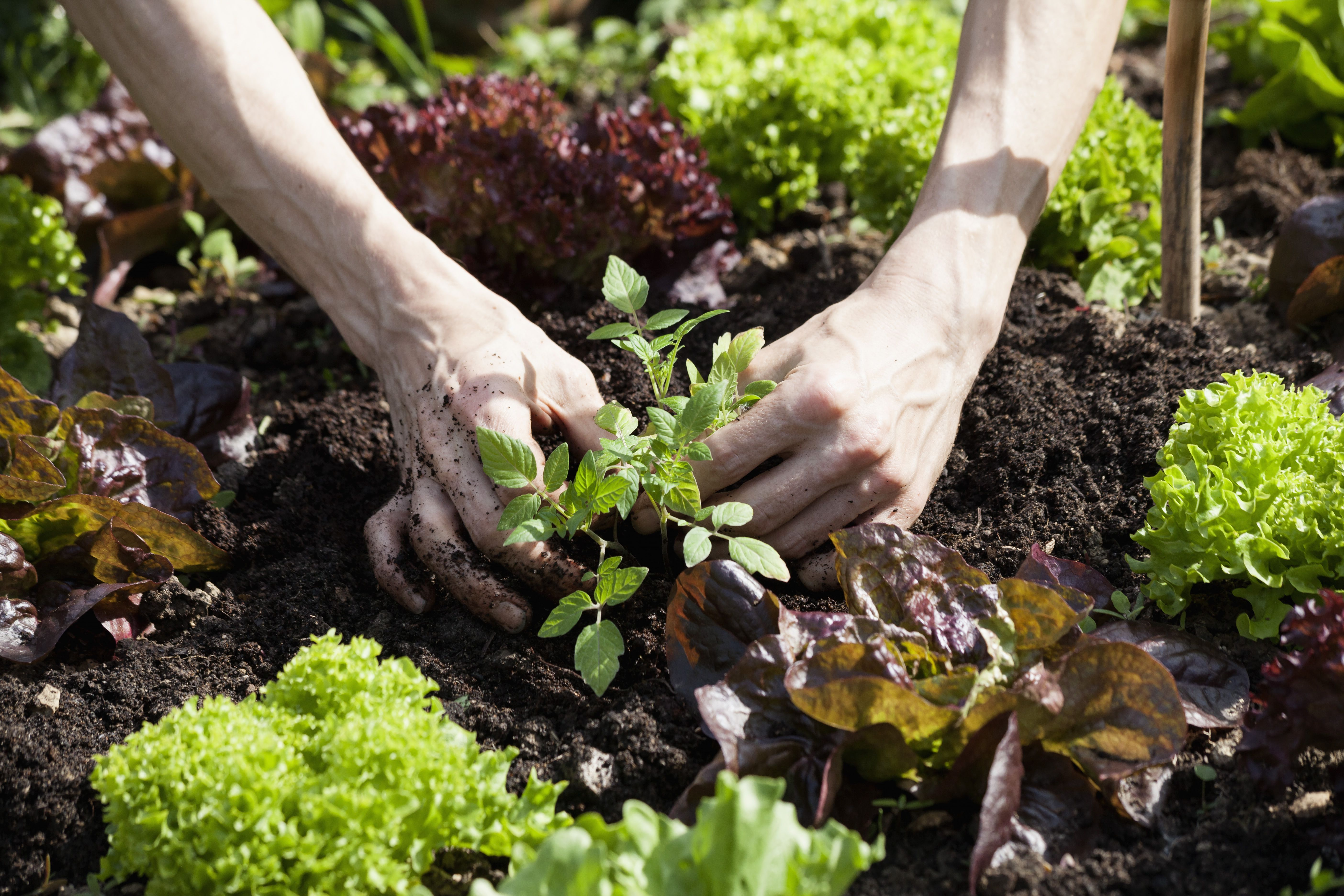 27 Vegetables And Herbs You Can Plant In August Growing 400 x 300