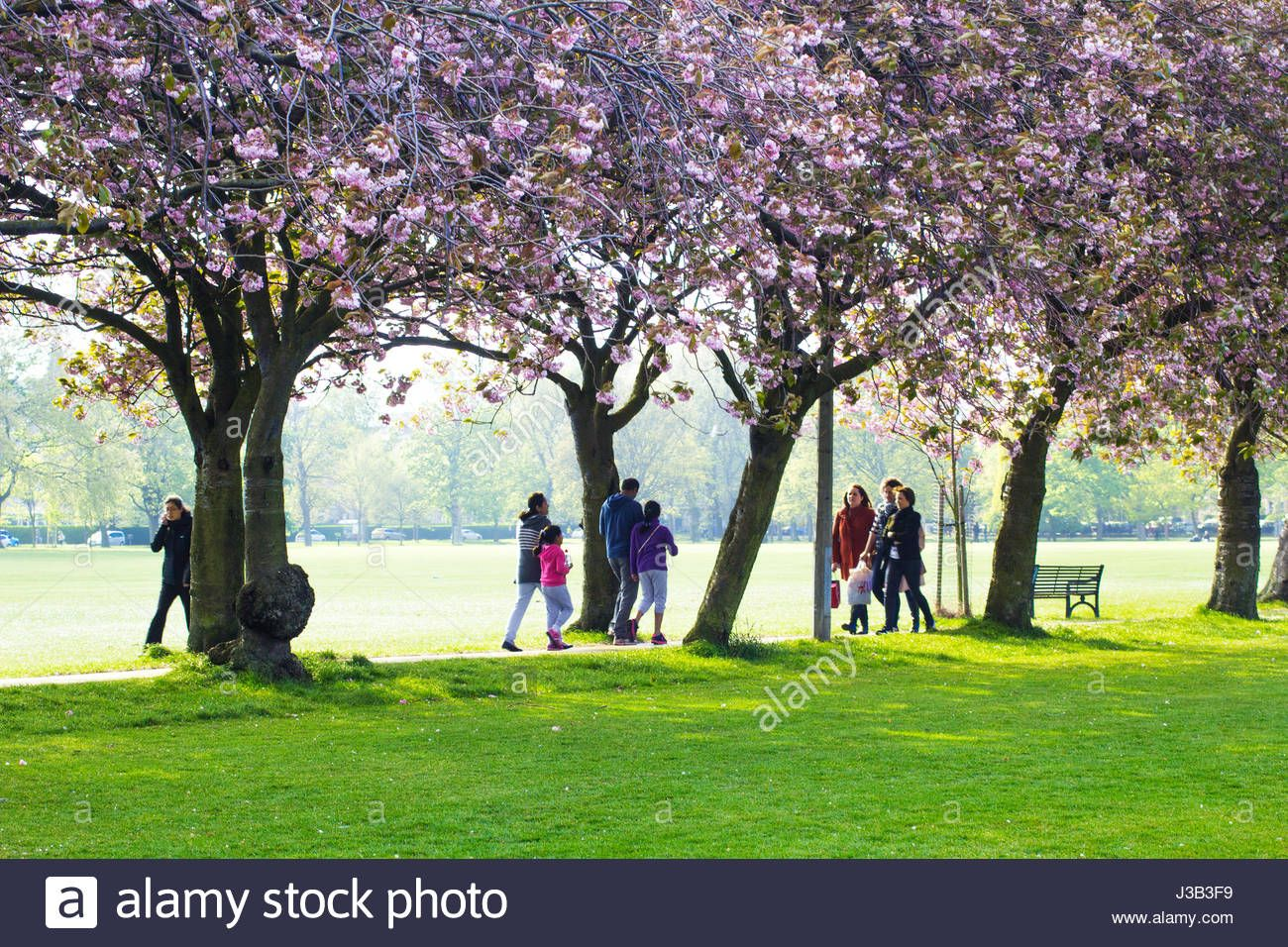 Pretty In Pink Scotland S Cherry Blossom Explosion Flowers Uk Scotland Places To Visit Pretty In Pink