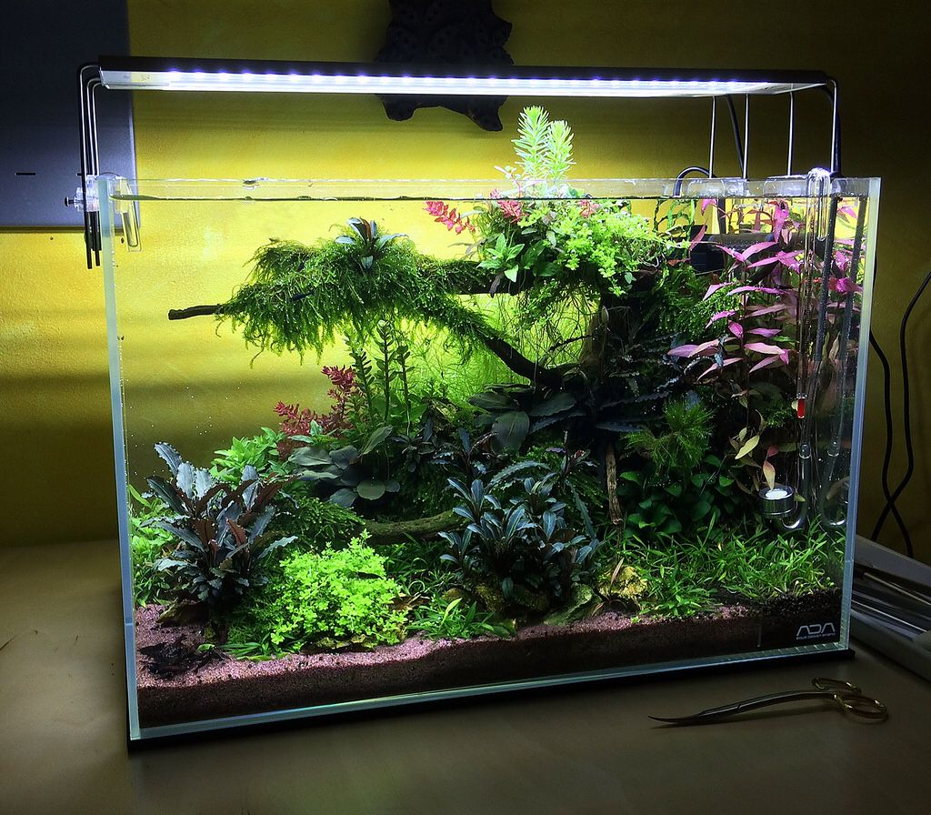 The Valley Of Flowers Aquascape 45p Tropical Fish Aquarium Fresh Water Fish Tank Aquascape