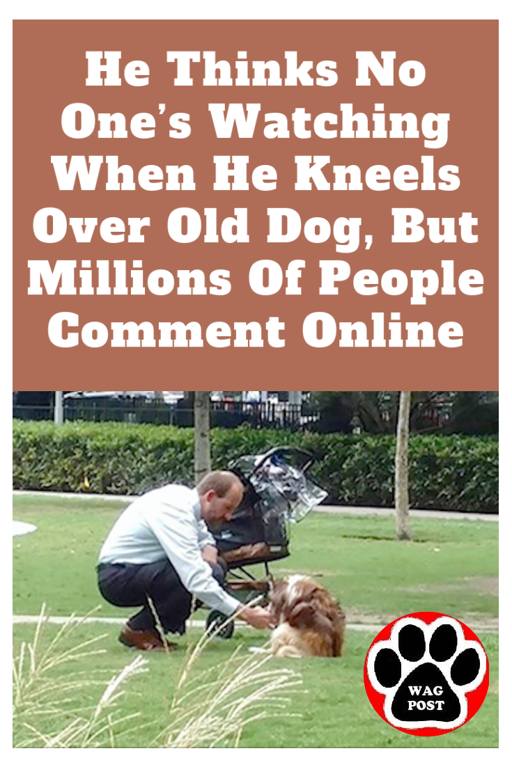 He Thinks No One's Watching When He Kneels Over Old Dog