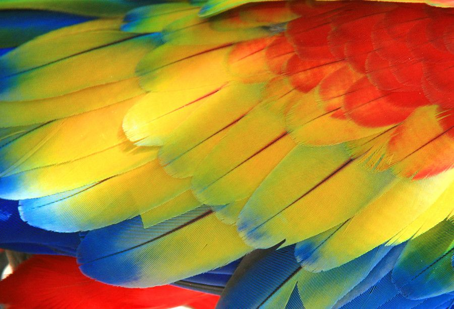 Brightly Colored Wings by Laura Bellamy on 500px