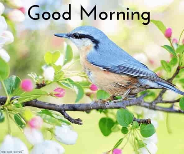 150 Beautiful Good Morning Images Best Collection Good
