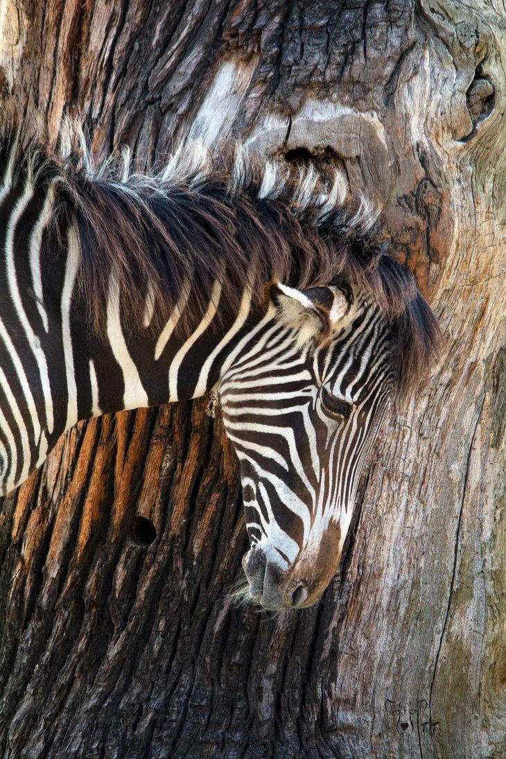 Texture of Nature by WildGepard