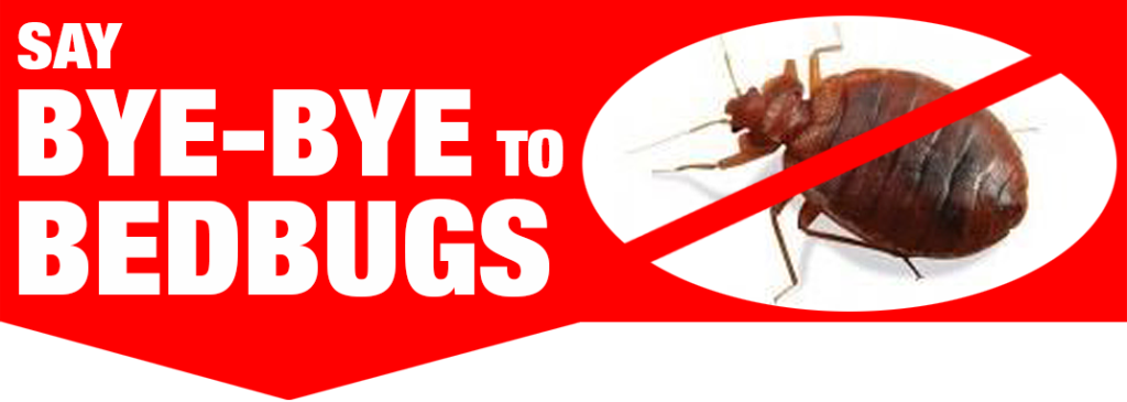 Are you waking up every morning itching from bed bug bites