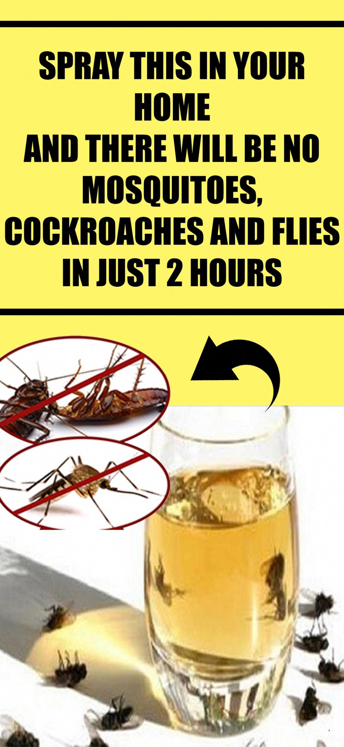 Spray This In Your Home And There Will Be No Mosquitoes