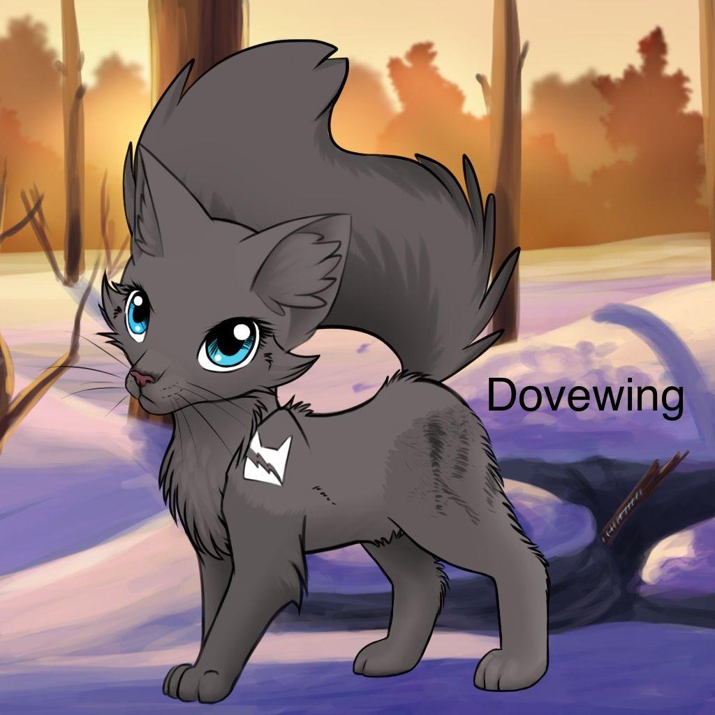 Dovewing Cat Creator Warrior Cats Anime