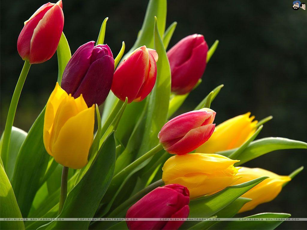 Wedding Flowers In Season Flowers 3 Pinterest Flowers
