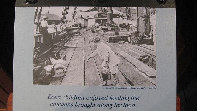 Even children enjoyed feeding the chickens brought along for food.    Max Lembke, schooner Helene, ca. 1900.    San Francisco Maritime National Historical Park  Fisherman's Wharf, San Francisco   en.wikipedia.org/wiki/San_Francisco_Maritime_National_His... #familyphotography  #weddingphotography  #outdoorphotography  #digitalphotography  #photographylessons   #portraitphotography #photographycourses  #landscapephotography  #childrenphotography   #foodphotography