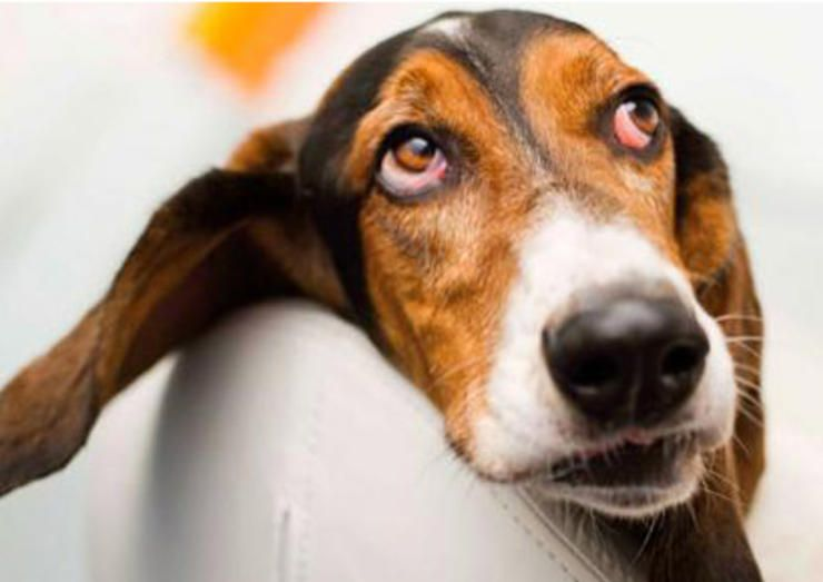Safe and simple home remedies that protect your pooch's health