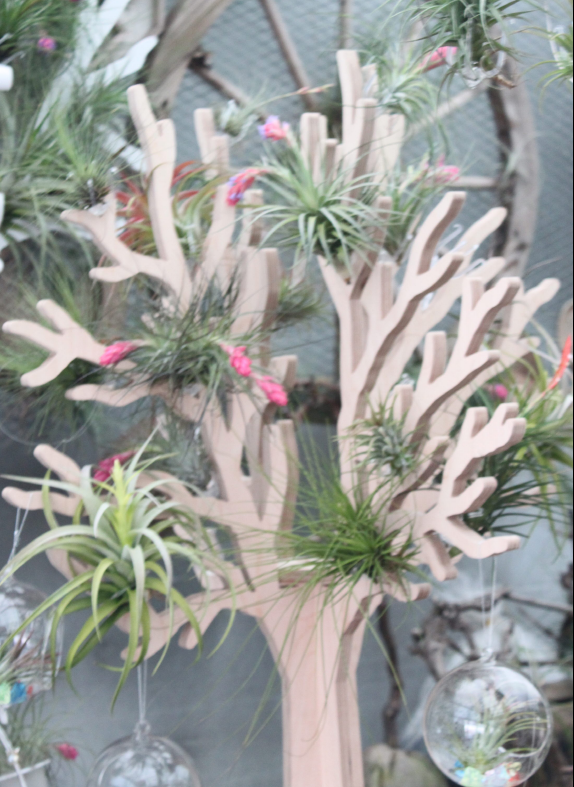 "Joinflower - Tillandsia Terrarium Kit"" Birch Tree Art Collection - Wood"