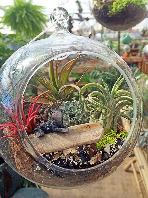 Attrayant Use Air Plants (Tillandsia) To Create Mini Gardens In A Bubble. #crafts  #gifts