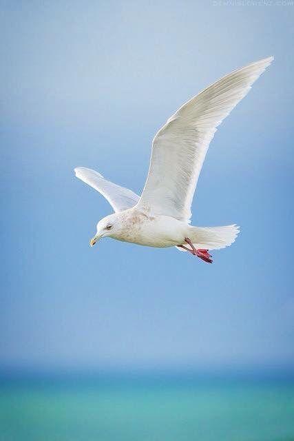 moment's  tiere wild tiere vogel malvorlagen