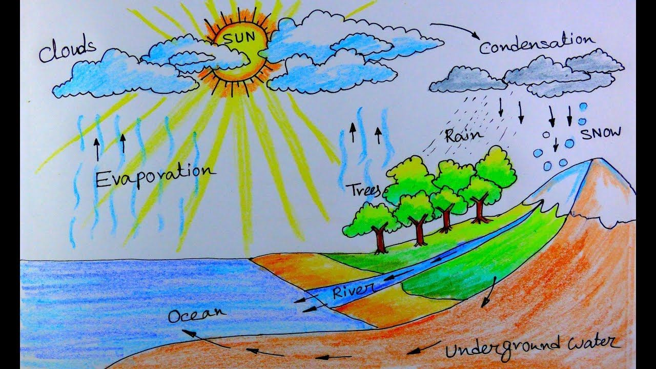 Water Cycle Diagram Labeled Drawing Novocom Top