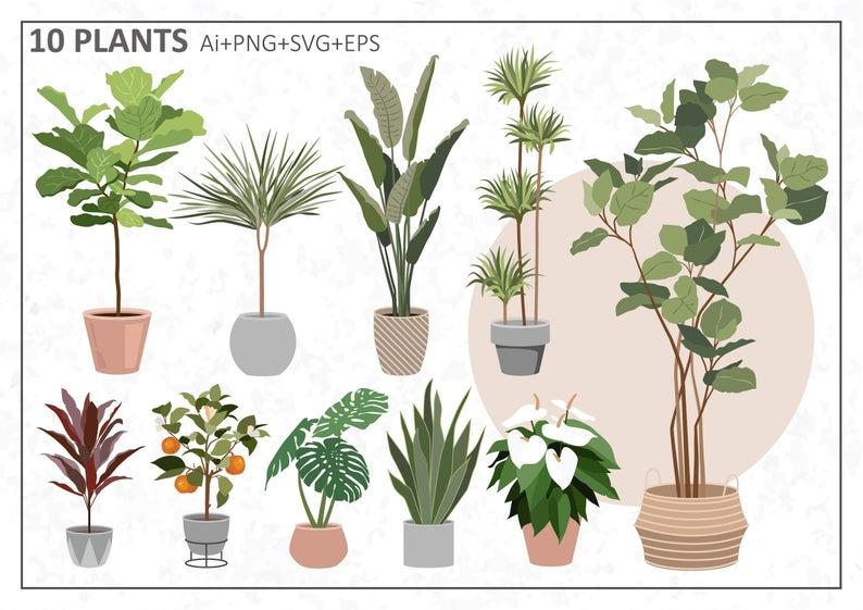 Set Of House Plants Clipart Flat Vector Plant Illustration Ai Svg Png In 2021 Plant Illustration Plants Illustration