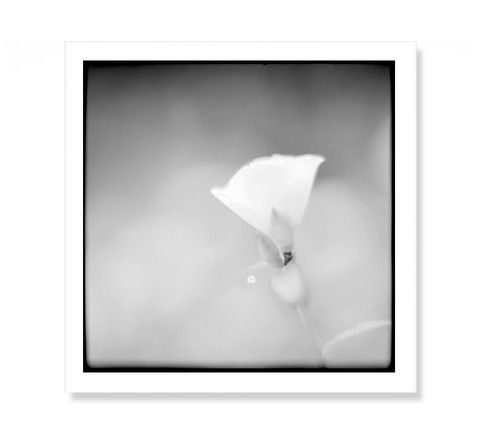 Minimalist Fine Art Prints | Nature Botanical Photography | Black and White Monochrome  #homedecor #walldecor #wallart #fernart #fineartprints #bw #blackandwhite #monochromeart