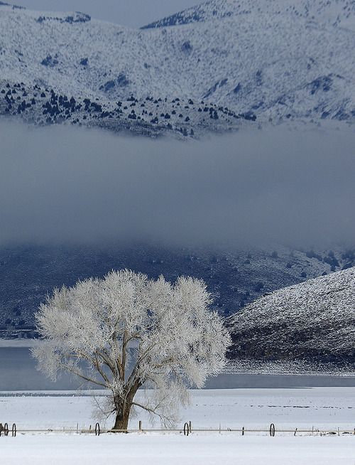 Topaz Lake Nevada By Tom Horton Winter Scenes Beautiful