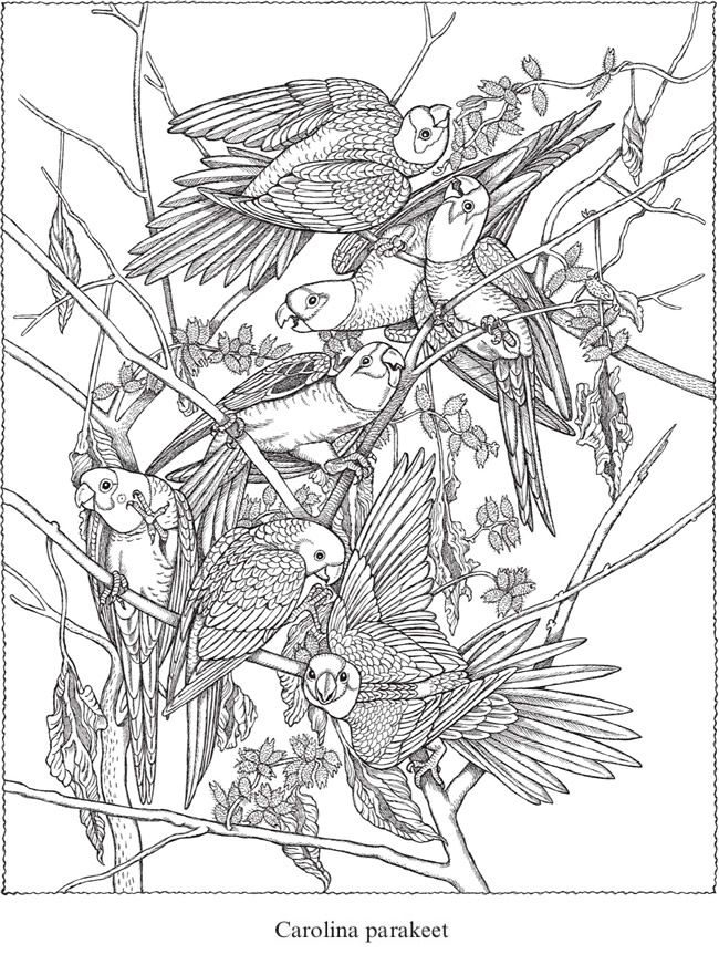 Welcome to Dover Publications | Dibujos - Aves | Pinterest ...
