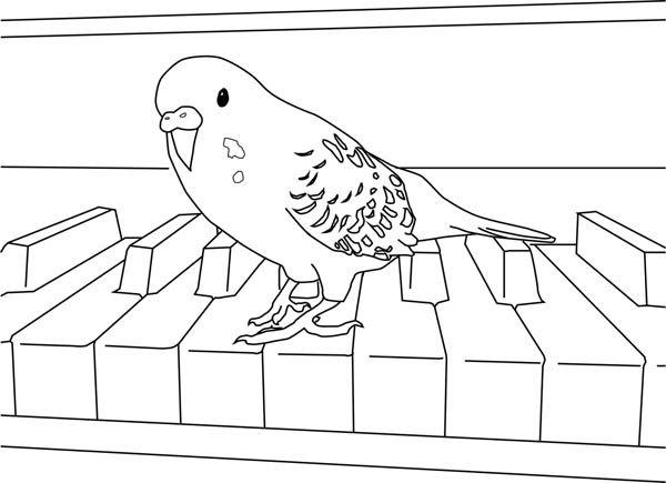 Parakeet playing piano coloring page