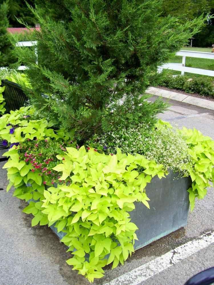 Fleurs en pot - conseils et idées pour enjoliver le jardin !
