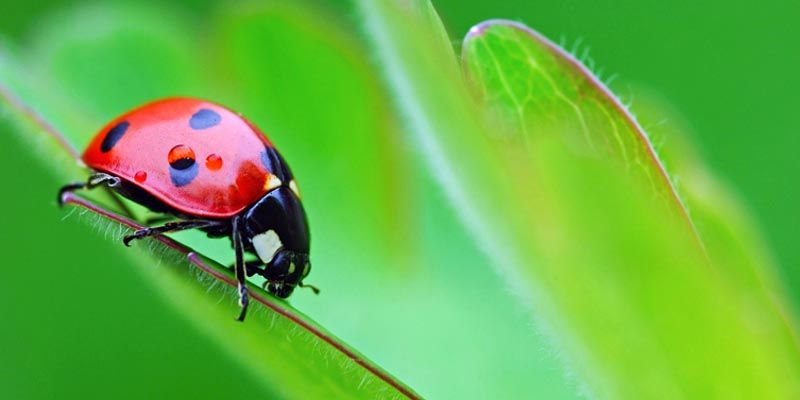 http://best5.it/post/5-curiosita-sugli-insetti/