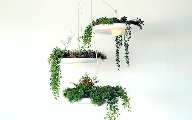 Stunning Hanging Babylon Plantable Light Fixture 1 Lamps in Combination with Potted Plants