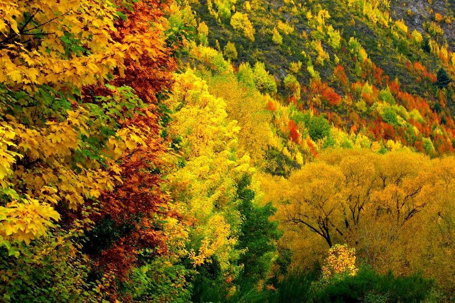 The Arrowtown Hills in Autumn (Central Otago New Zealand)