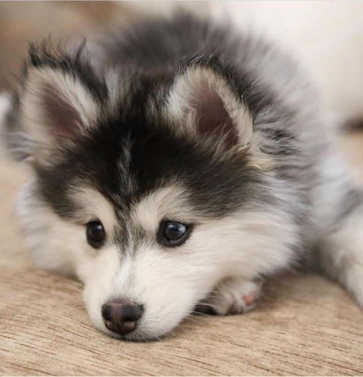 25Dog Cross Breeds That Are SoCute You'll Immedi