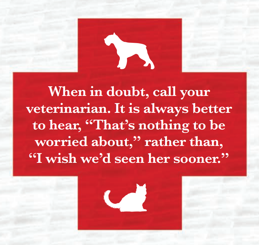 A Good Rule To Remember For All Pet Parents When In Doubt Call