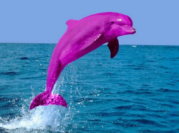 Cute Pink Dolphins Funny Pink Dolphin Pink Dolphin