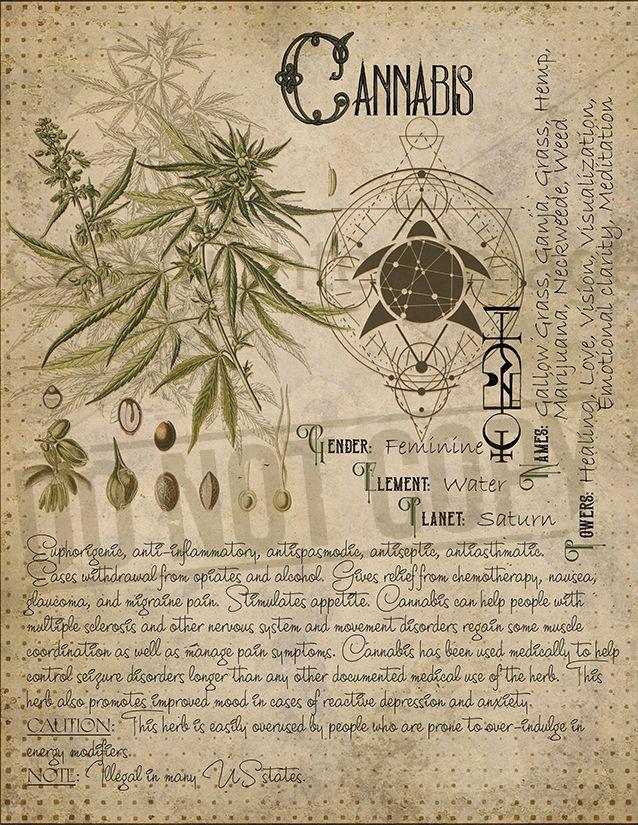 Cannabis #greenwitchcraft