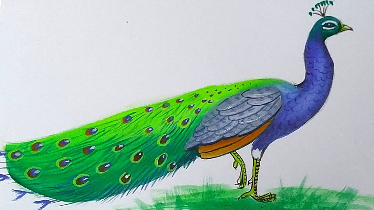 How To Draw A Peacock With Poster Colour Step By Step For Beginners Poster Colour Drawings Colorful Drawings