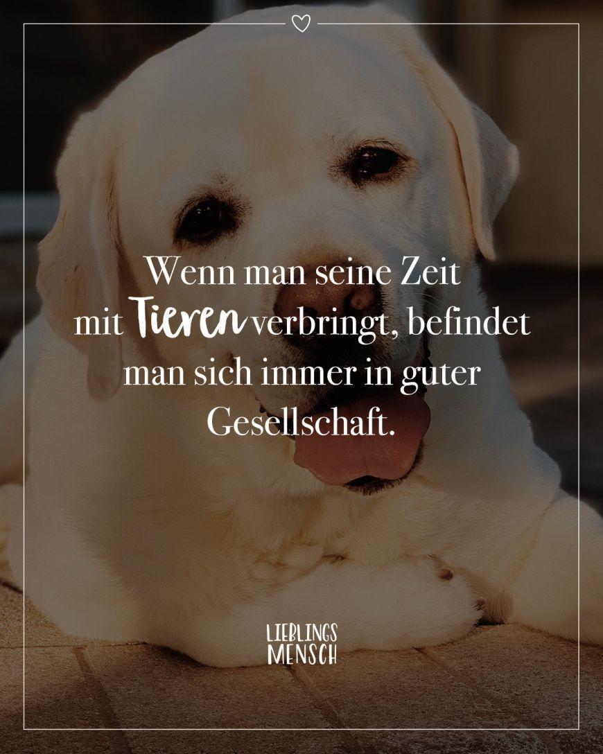 Nachdenken zum hunde zitate Hundesprüche zum