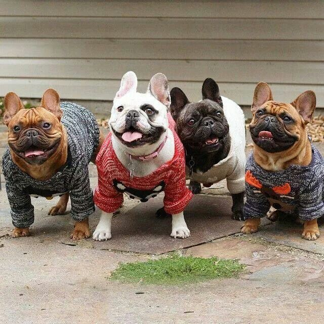 The Family Facebook Franse Bulldog Franse Buldog Hond Kat
