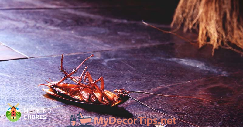 How To Get Rid Of Roaches From Your Home 7 Steps That Actually Work 8211 7 Actually F Kill Roaches Home Remedies For Roaches Natural Roach Repellent