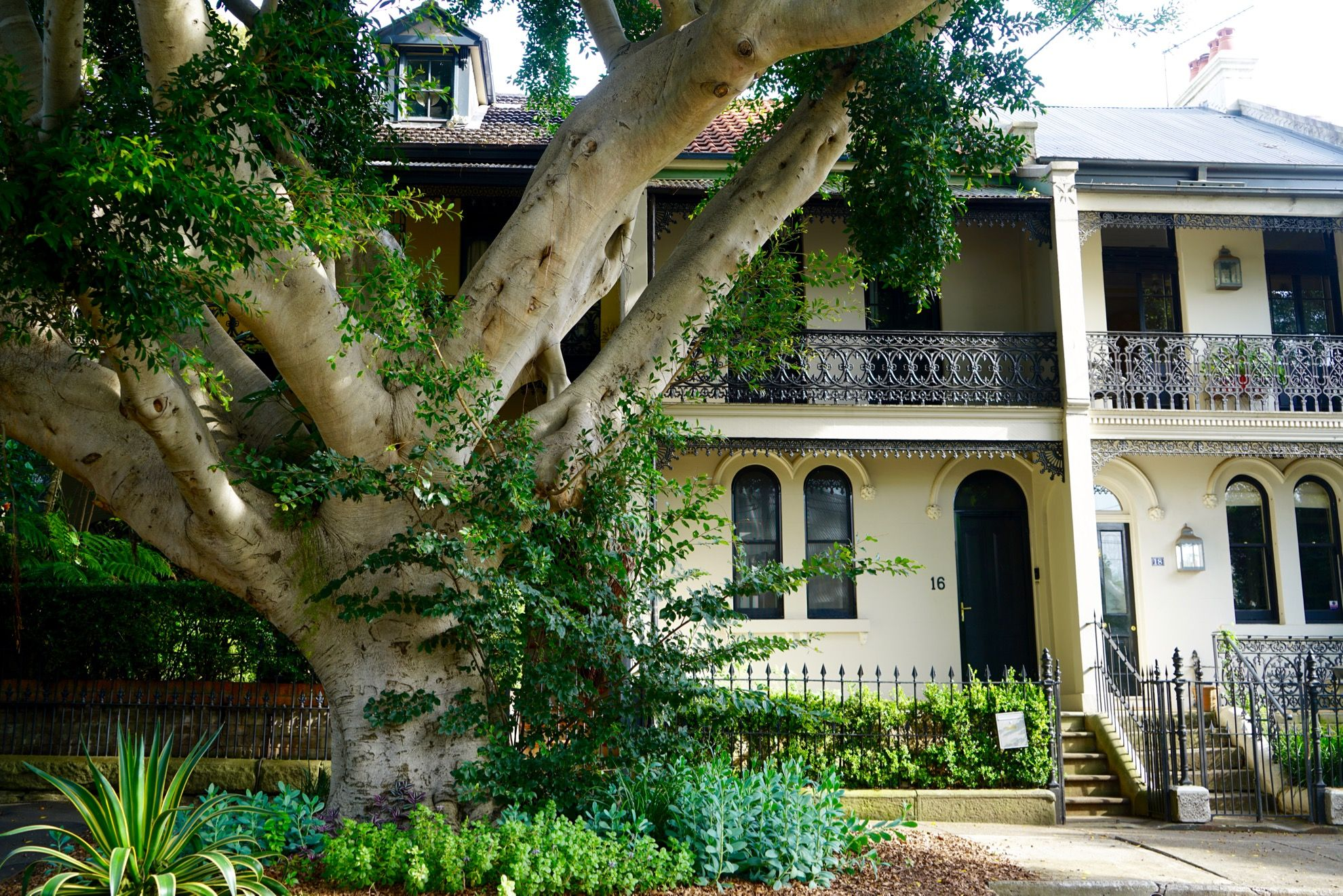 Surry Hills, Sydney where old trees push for space and