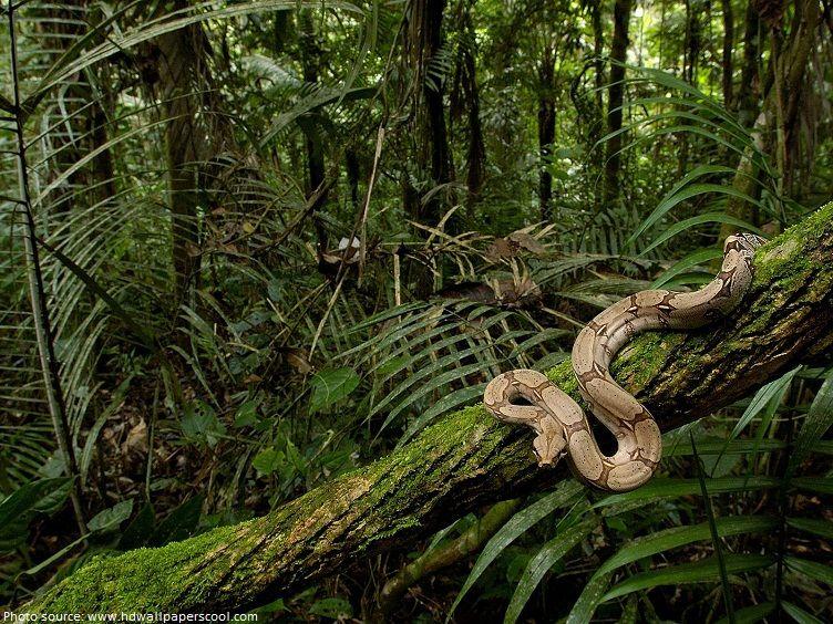 Interesting Facts About Amazon Rainforest Rainforest Animals
