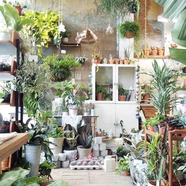More #Airplants and more #succulentplants (let's just say more #plants )  We are open 11.00am -7.00pm Tuesday to Sunday! ¤ #conservatoryarchives #Hackney #houseplants #indoorplants #interiordesign #indoorgardening #livingsculpture #hangingplants #airplants #london #plantshop #planters #pots