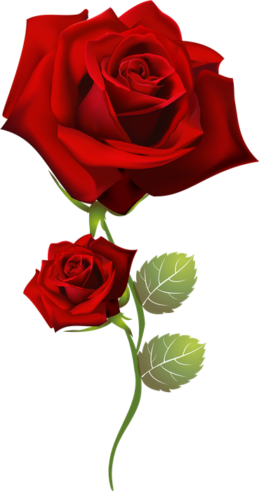 Pin De Sylvia Colon En Rosas Red Roses Beautiful Roses Y Flowers