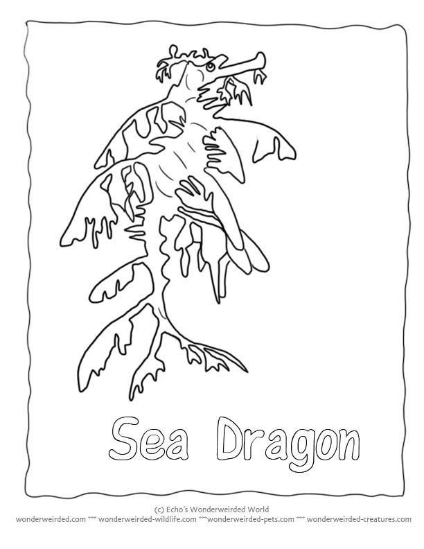 Free Seahorse Coloring Page Collection Of Seahorse Pictures To