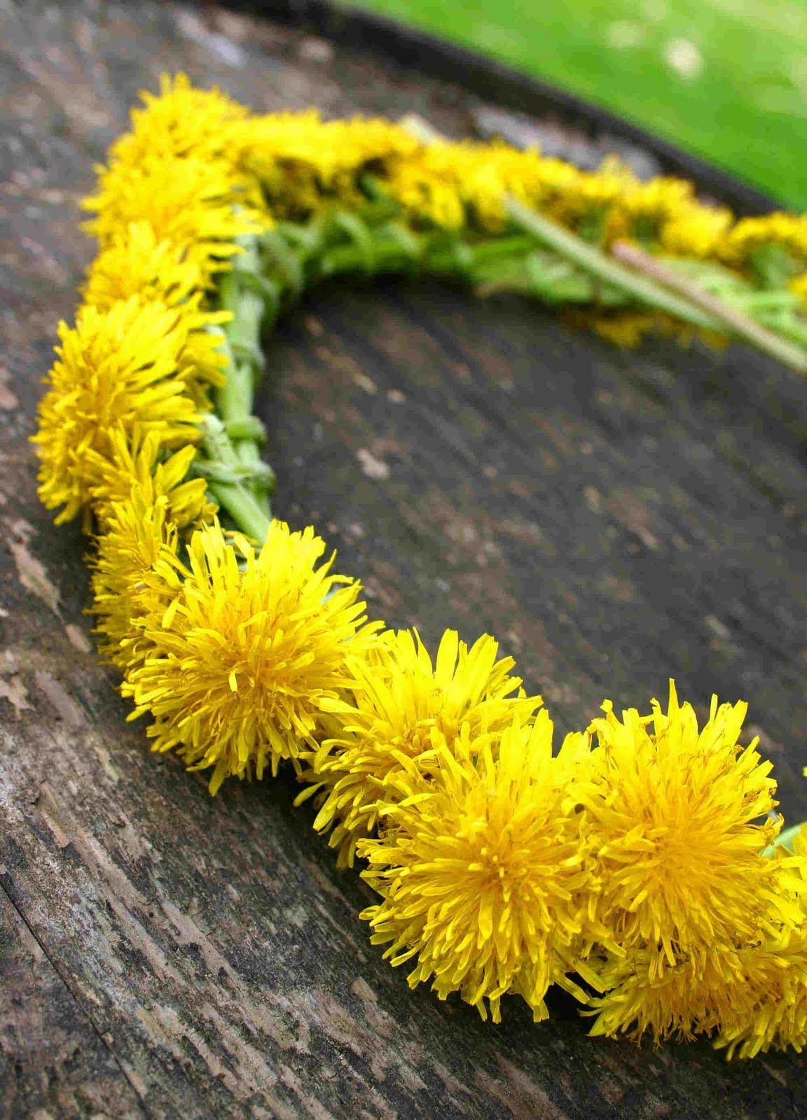 Dandelion crown and other beautiful nature crafts i always wanted wabi sabi wanderings crowned with flowers a tutorial for every girl to make her crown izmirmasajfo