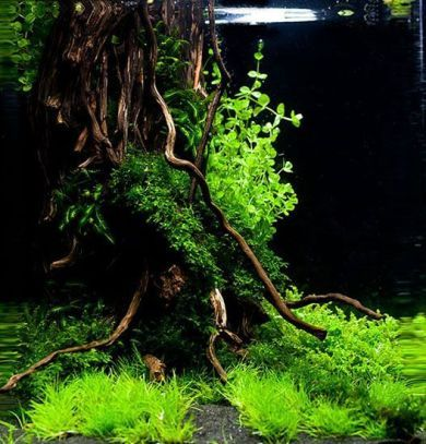 Aquascape Aquarium Design Ideas 30 | Acvariu, Acvarii, Pești