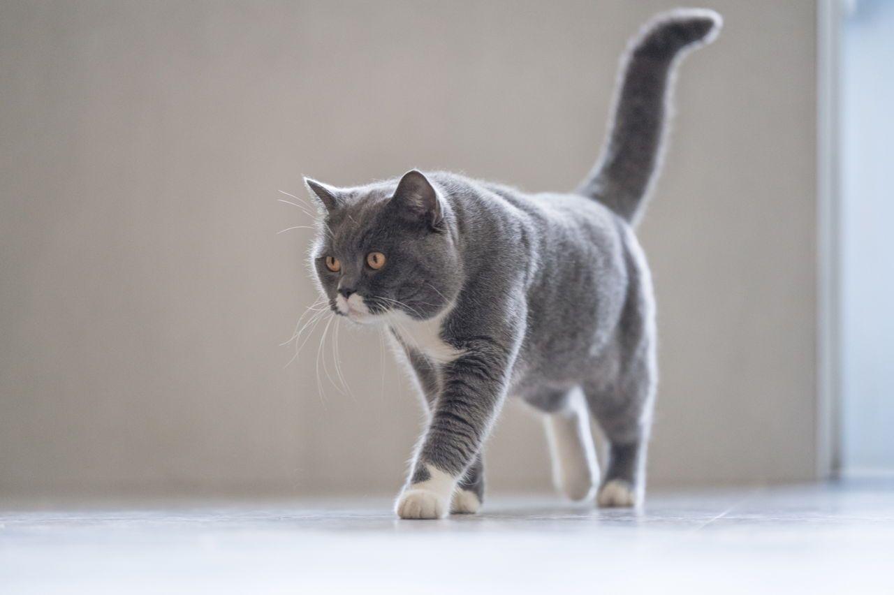 Image Result For Misbehaving Kittens Images Kitten Images Kittens Cats